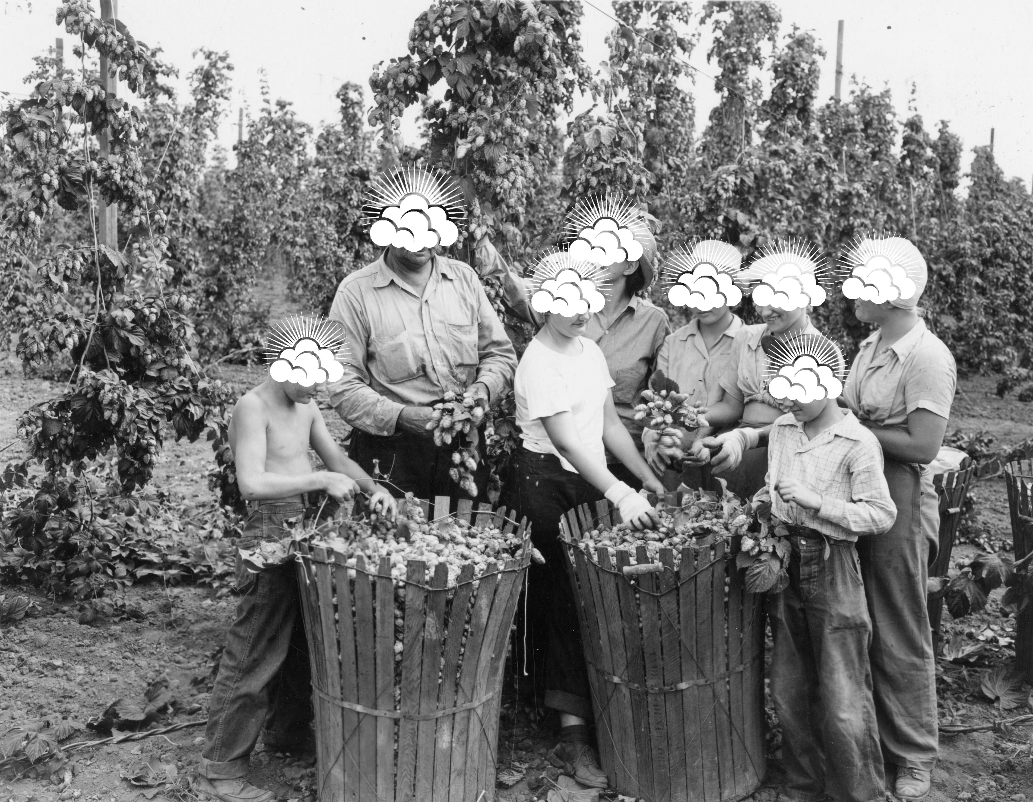 A photo of a family in the 1940s harvesting hops for beer making. They all have the Stormcloud Brewing cloudburst over their faces.